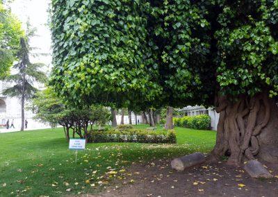 Baum vor blauer Moschee