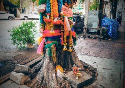 Heiliger Baum in Bangkok
