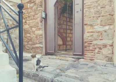 Katze in Anafiótika
