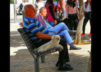 Hund und Herrchen in Jerusalem