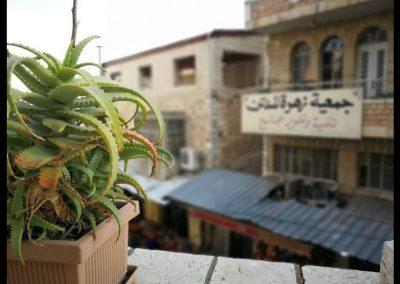 Kaktus am Hospiz