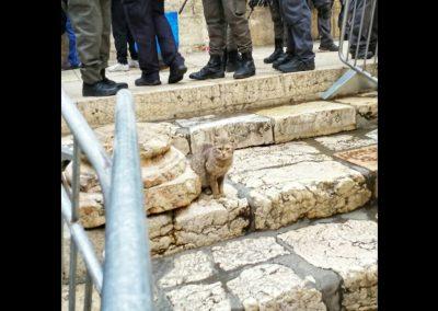 Katze in Jerusalem