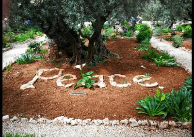 Peace in Garten Getsemani