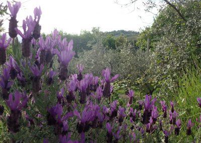 Casa Faustina Lavendel