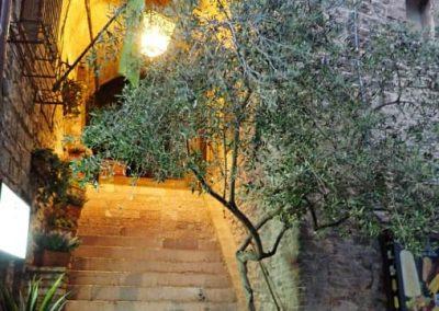 Olivenbaum in Assisi