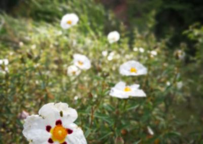 Blume im Bosco Assisi