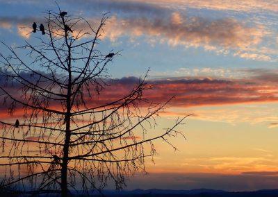 Krähen im Sonnenuntergang in Assisi